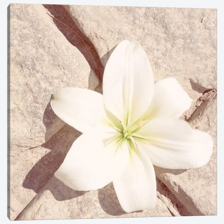 Stone Blossom IV Canvas Print #JJO59} by Jason Johnson Canvas Wall Art