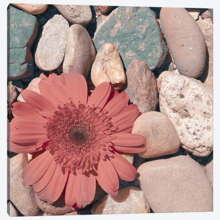 Stone Crop I Canvas Print #JJO60} by Jason Johnson Canvas Art Print