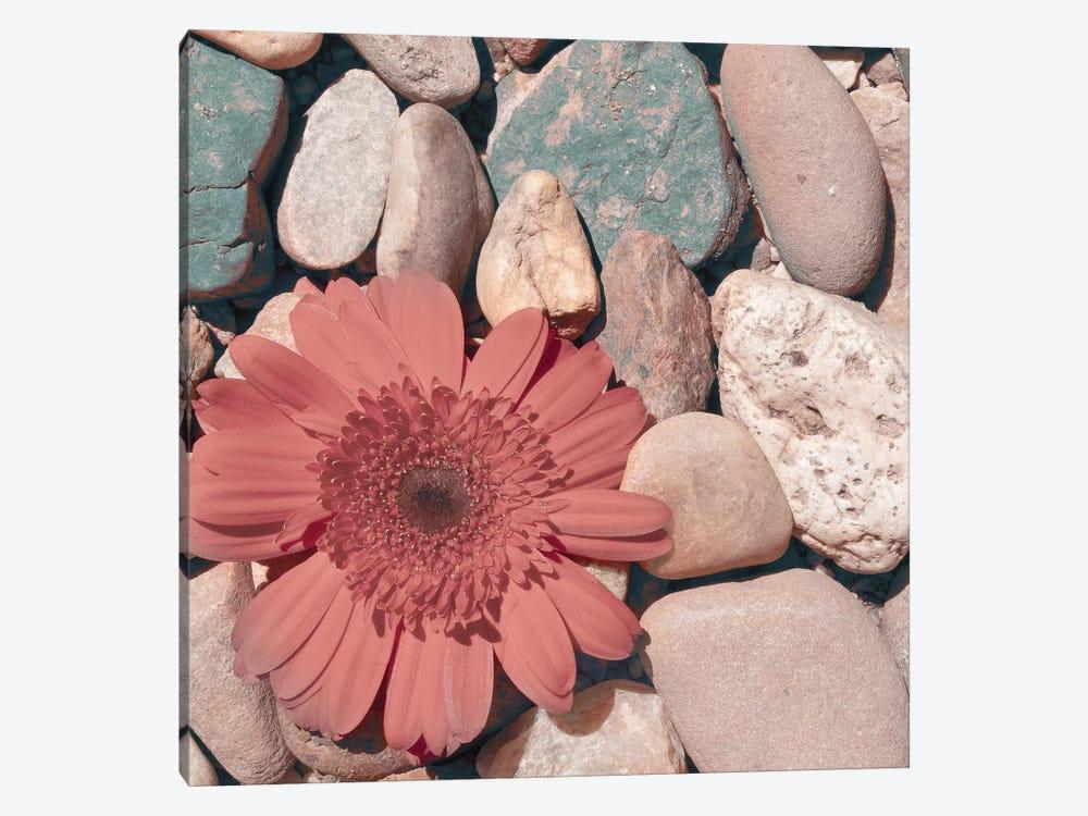 Stone Crop I by Jason Johnson 1-piece Canvas Wall Art