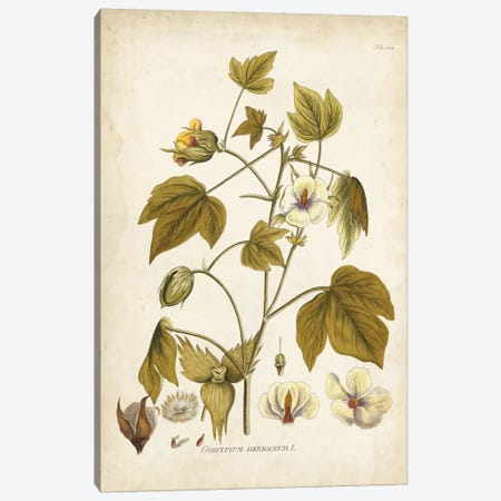 Elegant Botanical I Canvas Print #JJP1} by J.J. Plenck Canvas Art