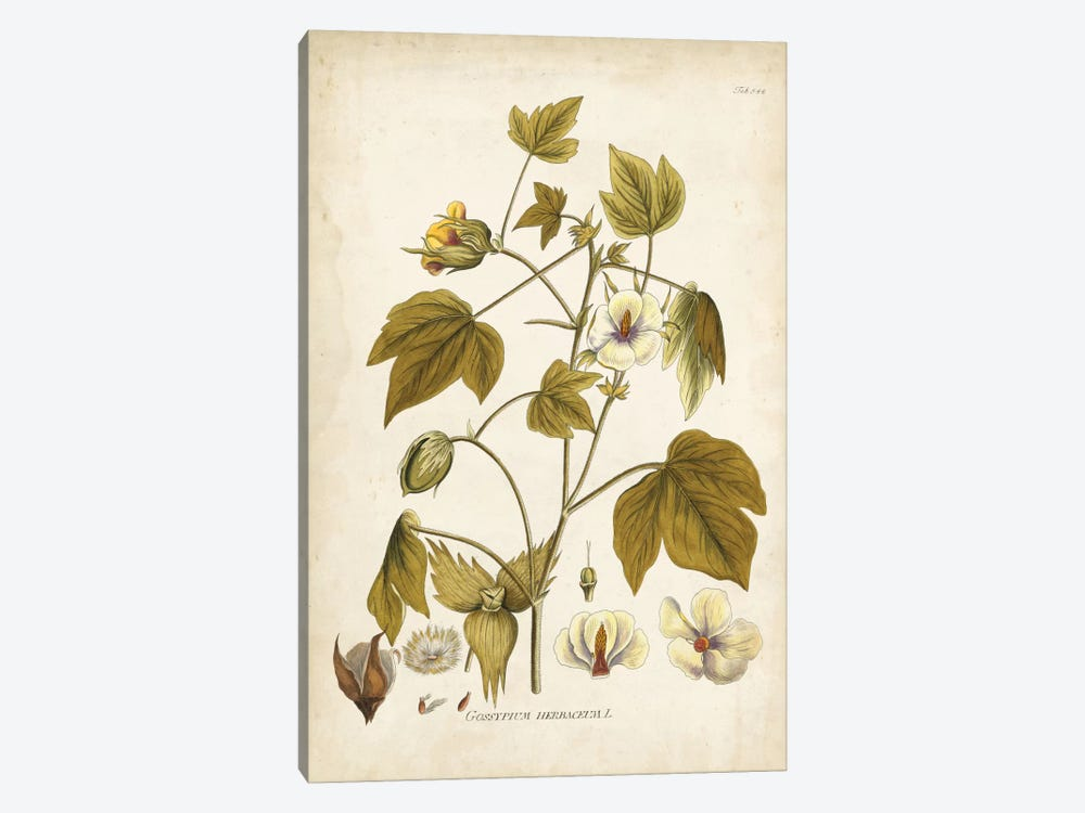 Elegant Botanical I by J.J. Plenck 1-piece Art Print