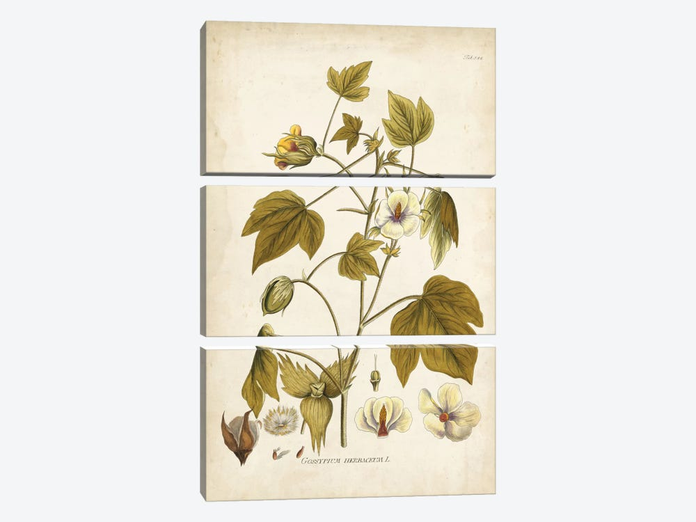 Elegant Botanical I by J.J. Plenck 3-piece Canvas Art Print