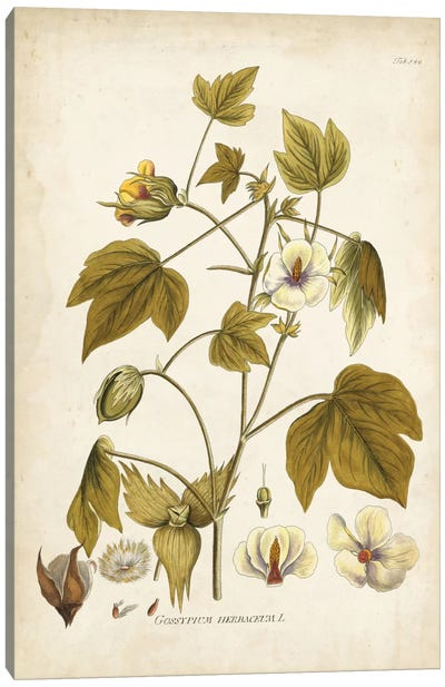 Elegant Botanical I Canvas Art Print