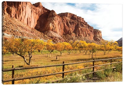 Mormon Pioneer Fruit Orchard Along Waterpocket Fold, Capitol Reef National Park, Utah, USA Canvas Art Print