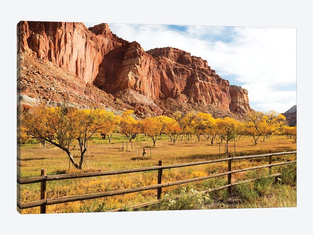 Mormon Pioneer Fruit Orchard Along Waterpocket Fold, Capitol Reef National Park, Utah, USA 1-piece Canvas Print