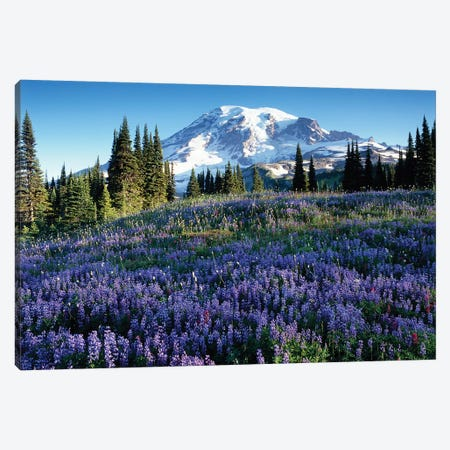 Snow-Covered Mount Rainier With A Wildflower Field In The Foreground, Mount Rainier National Park, Washington, USA Canvas Print #JJW15} by Jamie & Judy Wild Art Print