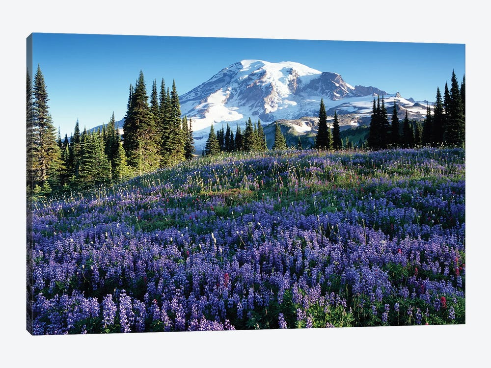 Snow-Covered Mount Rainier With A Wildflower Field In The Foreground, Mount Rainier National Park, Washington, USA by Jamie & Judy Wild 1-piece Canvas Wall Art