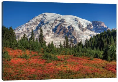 Snow-Covered Mount Rainier With An Autumn Landscape In The Foreground, Mount Rainier National Park, Washington, USA Canvas Print #JJW17