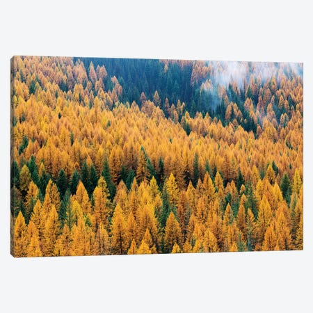 Montana, Lolo National Forest, golden larch trees in fog II Canvas Print #JJW30} by Jamie & Judy Wild Canvas Art