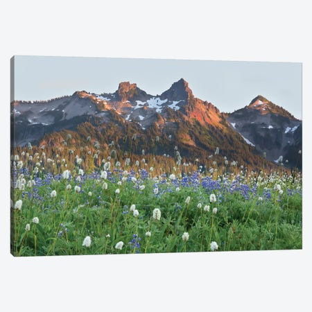 Washington State, Mount Rainier National Park, Tatoosh Range and Wildflowers Canvas Print #JJW37} by Jamie & Judy Wild Art Print