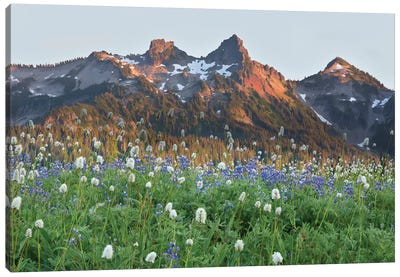 Washington State, Mount Rainier National Park, Tatoosh Range and Wildflowers Canvas Art Print