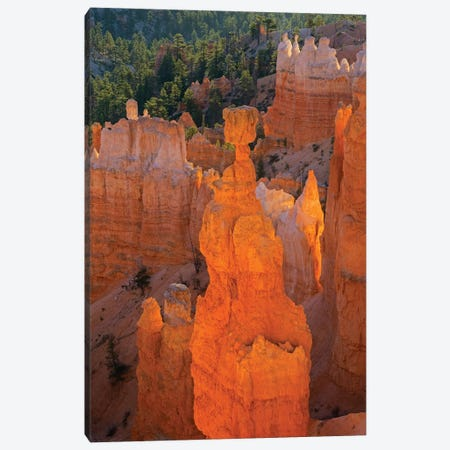 Utah, Bryce Canyon National Park. Thor's Hammer Canvas Print #JJW42} by Jamie & Judy Wild Art Print