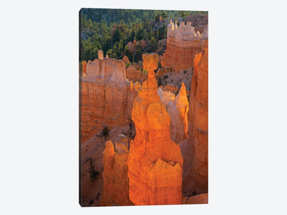 Utah, Bryce Canyon National Park. Thor's Hammer by Jamie & Judy Wild 1-piece Canvas Wall Art