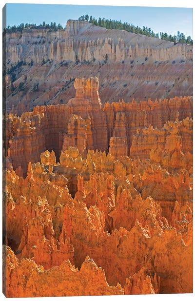 Utah, Bryce Canyon National Park. View of canyon with hoodoos Canvas Art Print