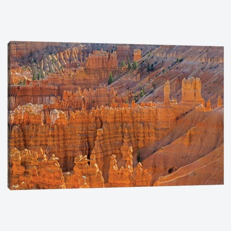 Utah, Bryce Canyon National Park. View of canyon with hoodoos Canvas Print #JJW50} by Jamie & Judy Wild Canvas Wall Art