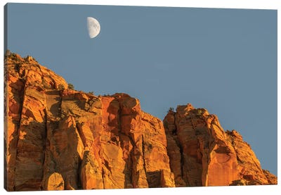 Utah, Zion National Park, Moon over The Watchman Canvas Art Print