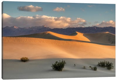 USA, California. Death Valley National Park, Mesquite Flats Sand Dunes, blowing sand. Canvas Art Print