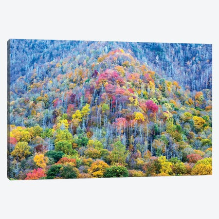 Colorful Autumn Landscape, Great Smoky Mountains National Park, Tennessee, USA Canvas Print #JJW6} by Jamie & Judy Wild Canvas Wall Art