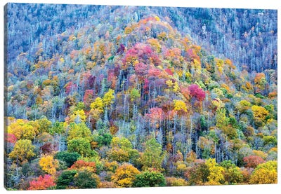 Colorful Autumn Landscape, Great Smoky Mountains National Park, Tennessee, USA Canvas Art Print