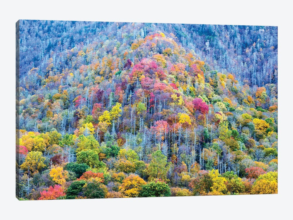 Colorful Autumn Landscape, Great Smoky Mountains National Park, Tennessee, USA by Jamie & Judy Wild 1-piece Canvas Print
