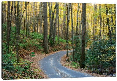 Roaring Fork Motor Nature Trail, Great Smoky Mountains National Park, Tennessee, USA Canvas Art Print