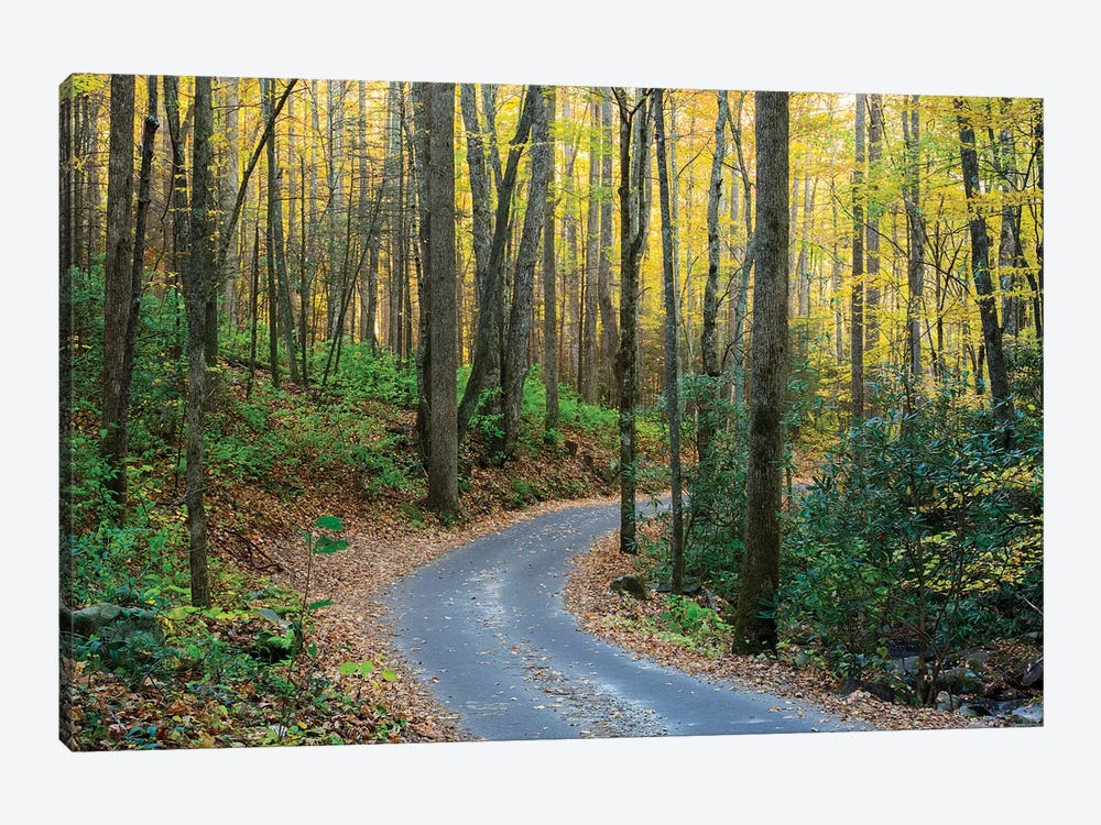 Roaring Fork Motor Nature Trail, Great Smoky Mountains National Park, Tennessee, USA by Jamie & Judy Wild 1-piece Canvas Artwork