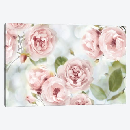 Pink Rose Garden III Canvas Print #JLA1} by Joanna Lane Canvas Art