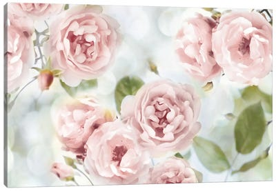 Pink Rose Garden III Canvas Art Print