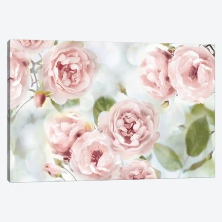 Pink Rose Garden III Canvas Print #JLA1} by Joanna Lane Canvas Art