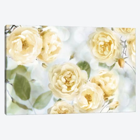 Yellow Rose Garden III Canvas Print #JLA2} by Joanna Lane Canvas Artwork