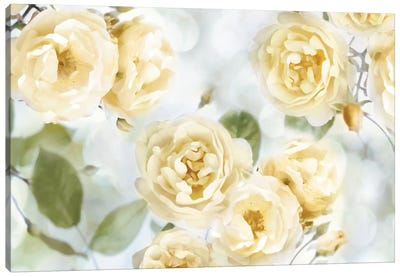 Yellow Rose Garden III Canvas Art Print
