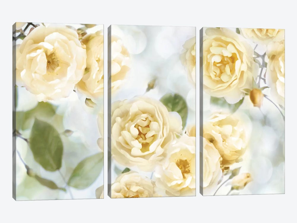 Yellow Rose Garden III 3-piece Canvas Print