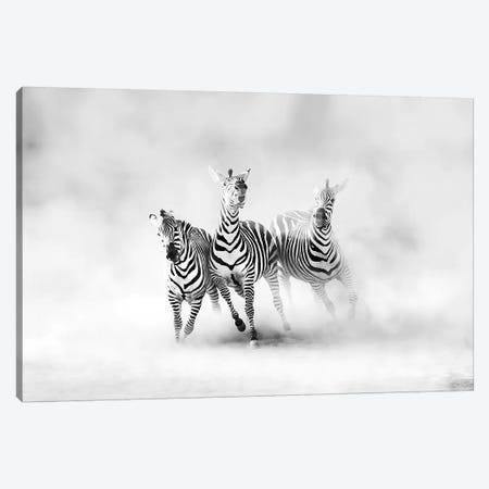 Zebras Canvas Print #JLD1} by Juan Luis Duran Canvas Print