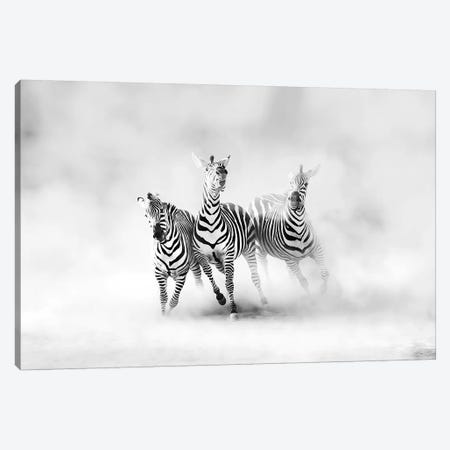 Zebras 3-Piece Canvas #JLD1} by Juan Luis Duran Canvas Print
