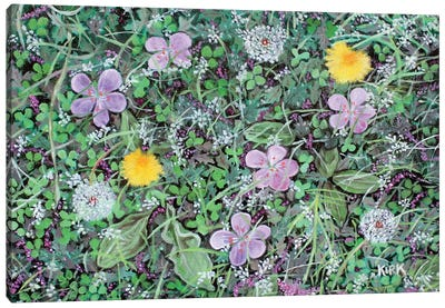 Dandelions and Clover Canvas Art Print