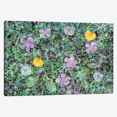 Dandelions and Clover Canvas Print #JLK102} by Jerry Lee Kirk Canvas Wall Art