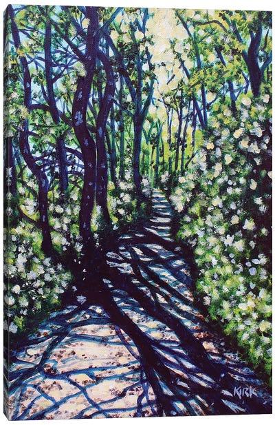 Sunlight and Shadows Canvas Art Print