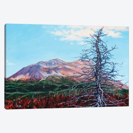 Ghost Tree Alaska Canvas Print #JLK34} by Jerry Lee Kirk Canvas Print