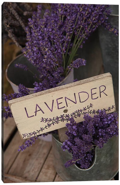 Dried Lavender For Sale, Sequim, Clallam County, Washington, USA Canvas Art Print