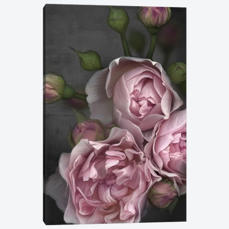 Pink Peony 3-Piece Canvas #JLO17} by Juliana Loomer Canvas Print