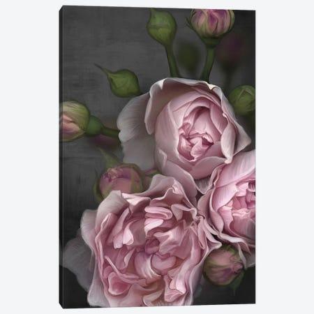 Pink Peony Canvas Print #JLO17} by Juliana Loomer Canvas Print