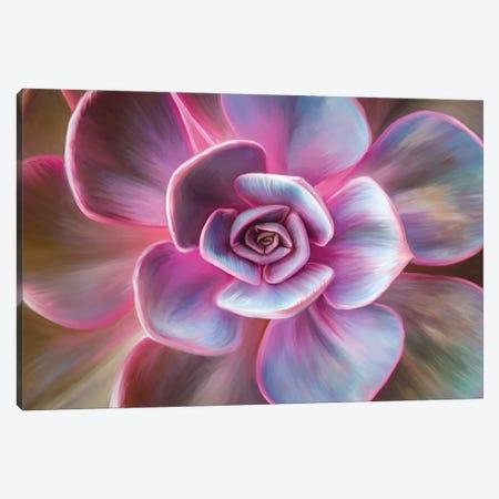 Pink Mandala Canvas Print #JLO36} by Juliana Loomer Art Print
