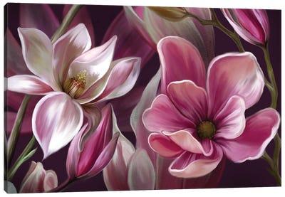 Pink Magnolia Canvas Art Print
