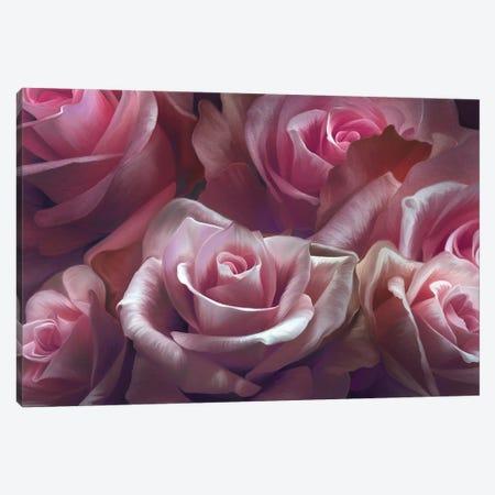 Pink Roses Canvas Print #JLO49} by Juliana Loomer Canvas Print
