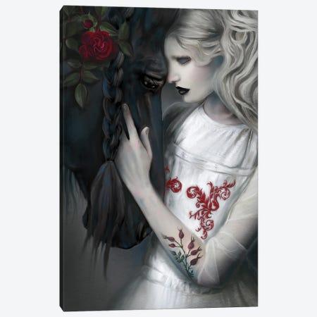 Black Beauty Canvas Print #JLO6} by Juliana Loomer Canvas Print
