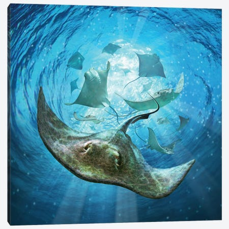 Stingrays Canvas Print #JLR26} by Jerry Lofaro Canvas Print