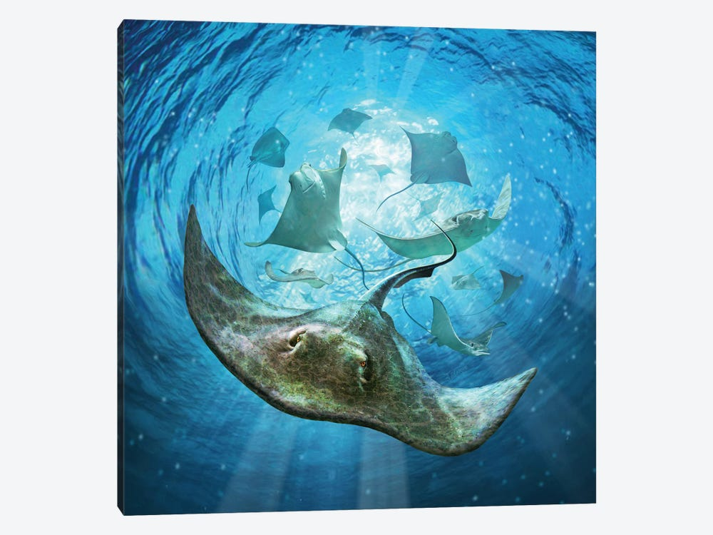 Stingrays by Jerry Lofaro 1-piece Canvas Wall Art