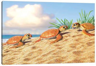 Baby Turtles Canvas Art Print