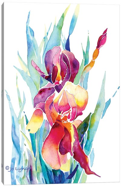 Iris Flower Canvas Art Print