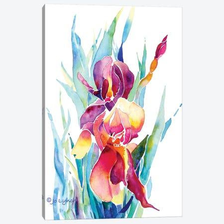 Iris Flower Canvas Print #JLY104} by Jo Lynch Canvas Art Print